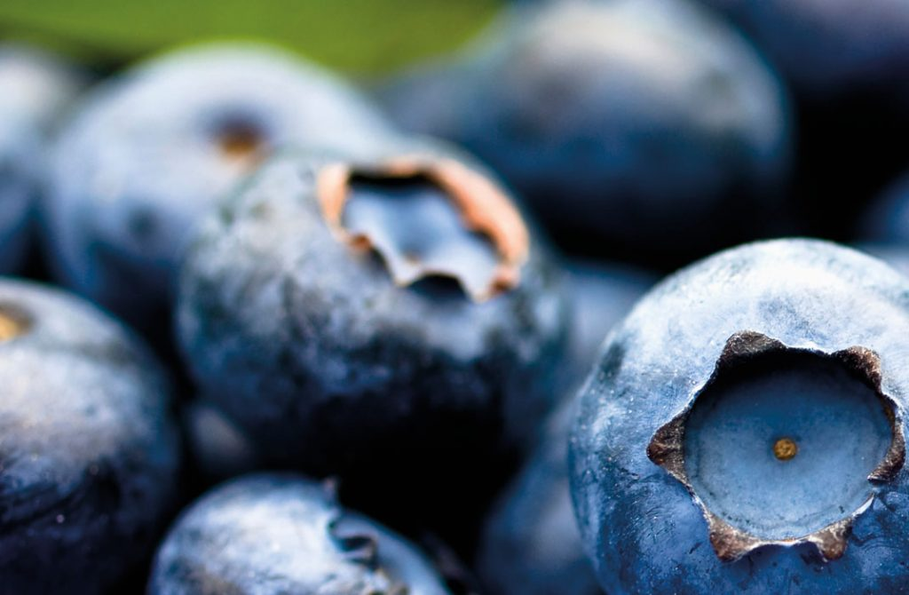 blueberries_fruit