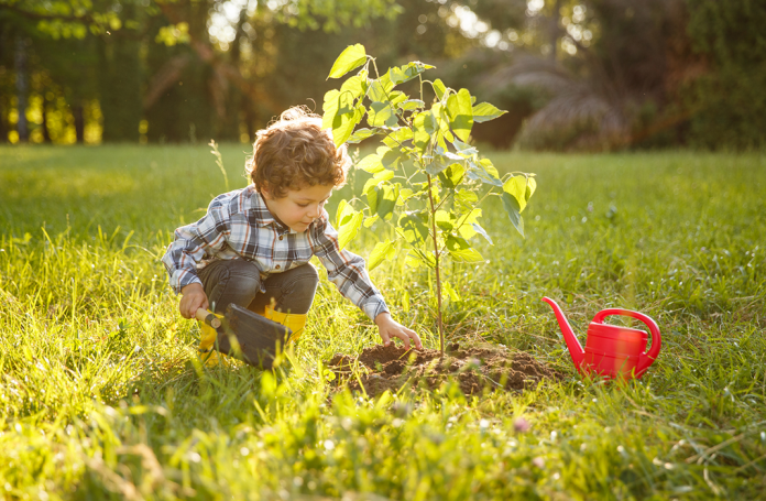 Toddler watering a tree