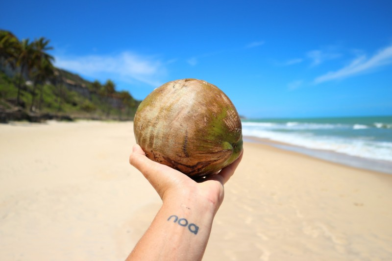 baby-size-coconut-31-weeks-pregnant