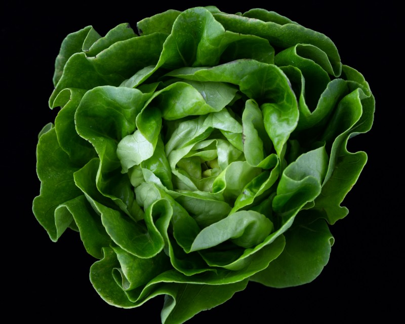 37-weeks-pregnant-baby-size-romaine-lettuce