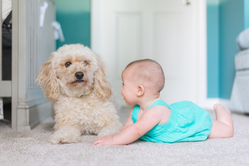 baby-proof-home-pets